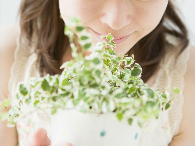 鉢植えを持つ女性